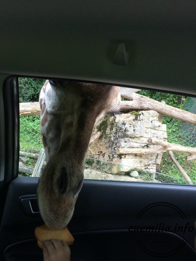 gradina zoologica Parco Natura Viva