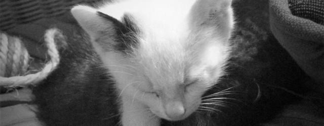 Pisicuță, pis, pis, pis