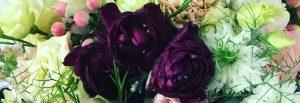 flori de la Profi