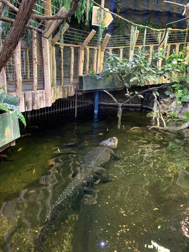 crocodil Tropicarium