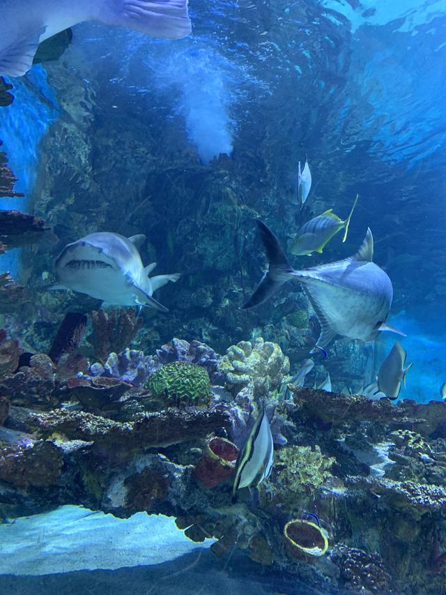 rechin Aquarium Budapesta