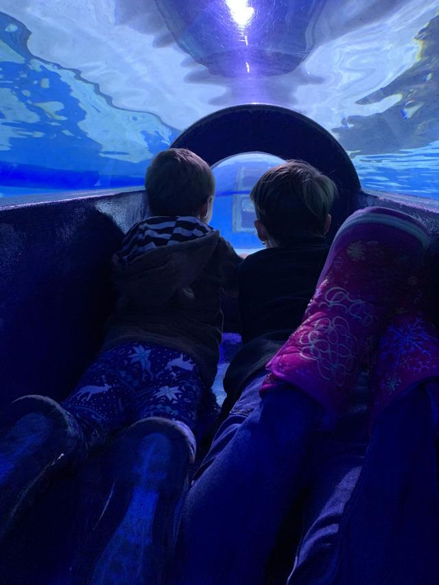 tunel aquarium
